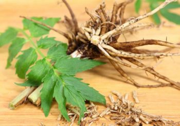 Ease Your Worried Mind with Valerian Tea