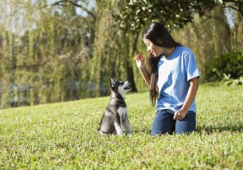 How to Give Your Cat or Dog Commands