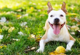 10 Ways to Celebrate Your Dog This Spring