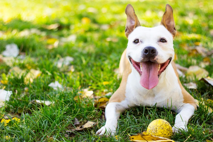 celebrate spring with your dog