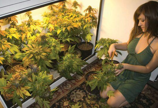 grow marijuana at home